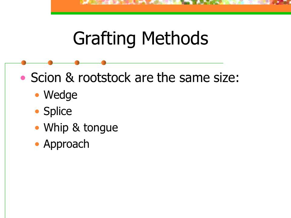 Grafting Methods Scion & rootstock are the same size: Wedge Splice Whip & tongue Approach