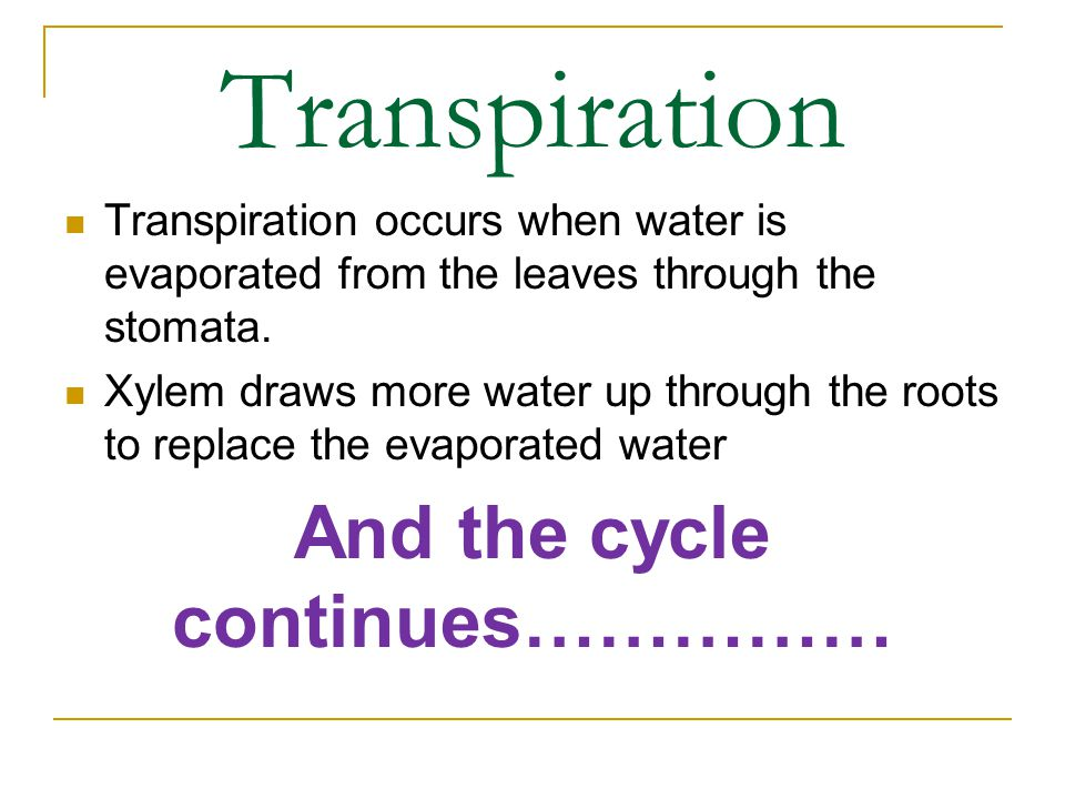 Transpiration Transpiration occurs when water is evaporated from the leaves through the stomata. Xylem draws more water up through the roots to replac