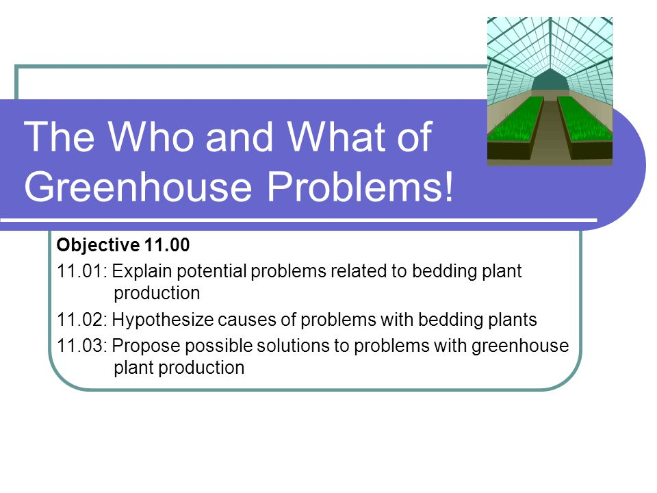 The Who and What of Greenhouse Problems! Objective 11.00 11.01: Explain potential problems related to bedding plant production 11.02: Hypothesize caus