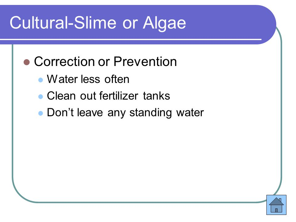 Cultural-Slime or Algae Correction or Prevention Water less often Clean out fertilizer tanks Don't leave any standing water