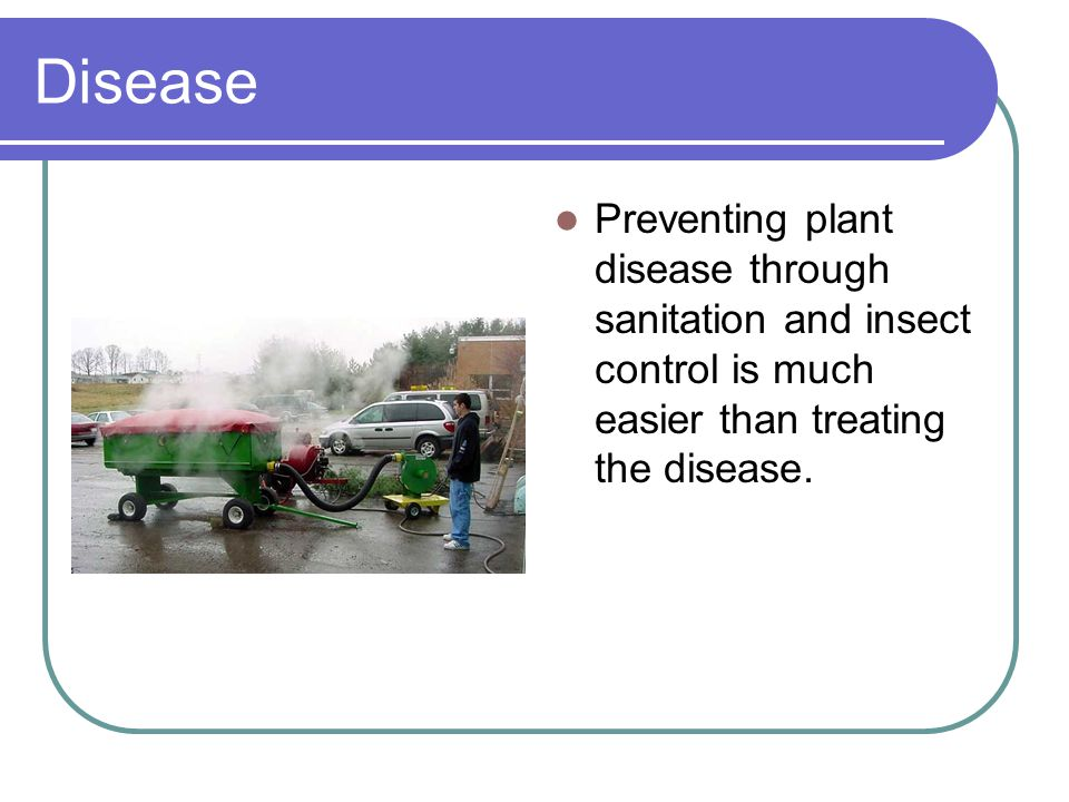 Disease Preventing plant disease through sanitation and insect control is much easier than treating the disease.