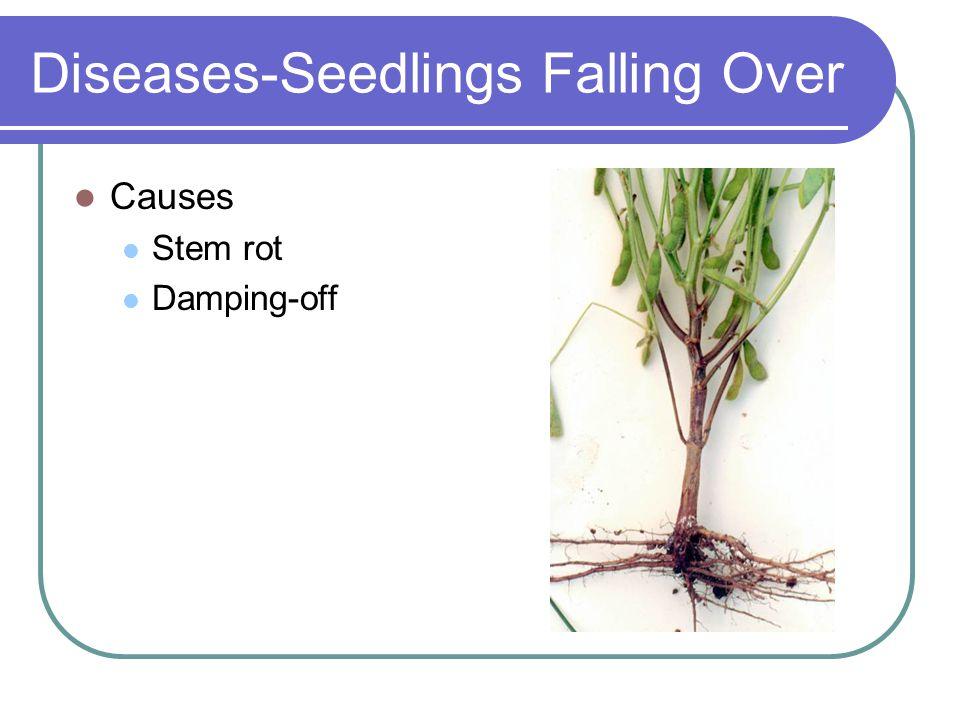Diseases-Seedlings Falling Over Causes Stem rot Damping-off