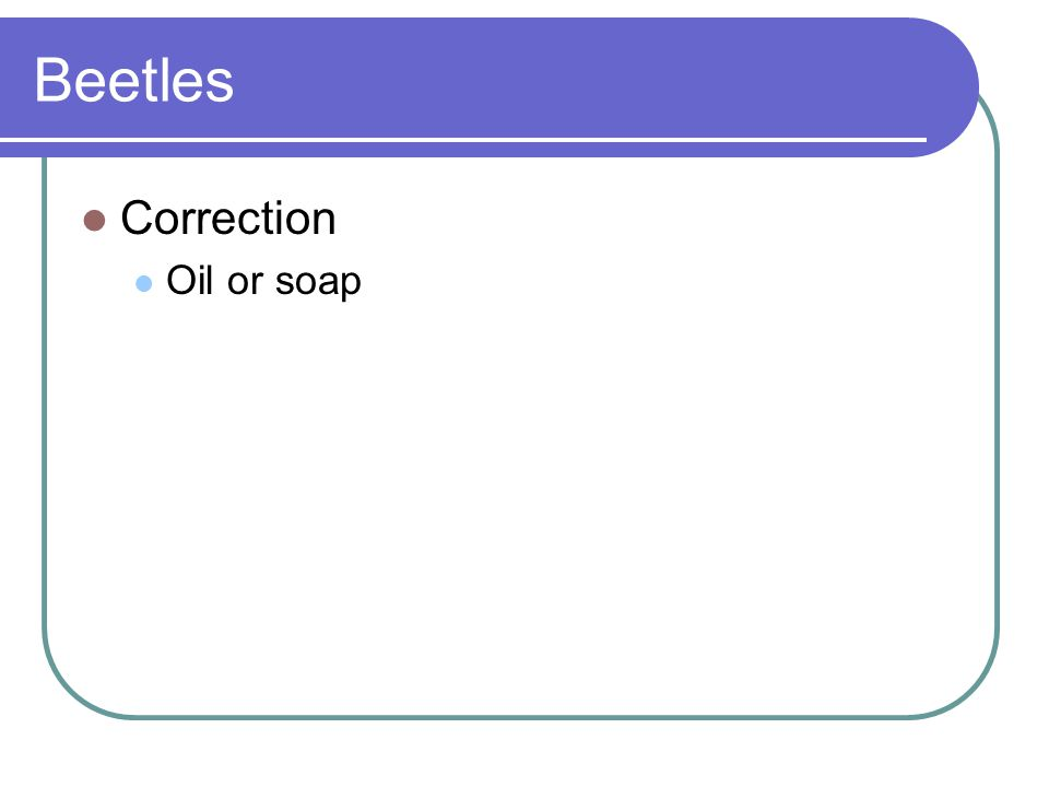 Beetles Correction Oil or soap