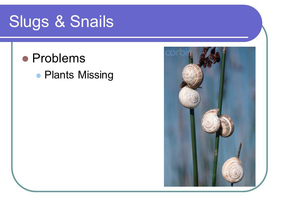 Slugs & Snails Problems Plants Missing