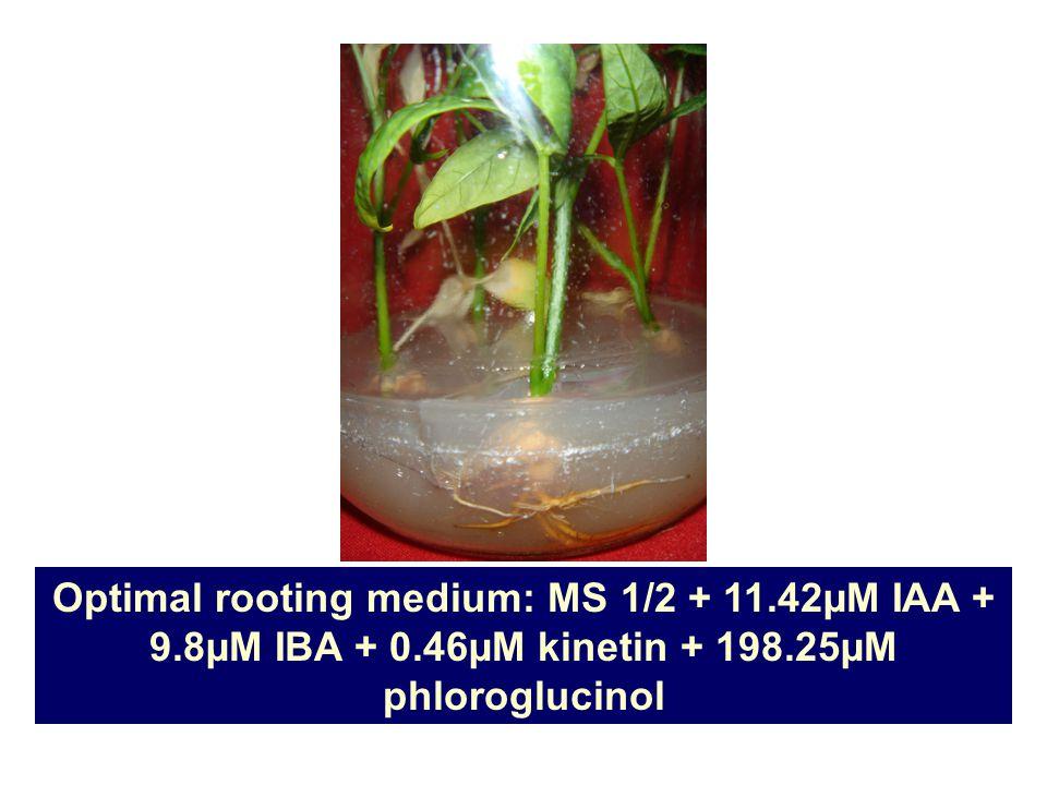 Optimal rooting medium: MS 1/2 + 11.42µM IAA + 9.8µM IBA + 0.46µM kinetin + 198.25µM phloroglucinol
