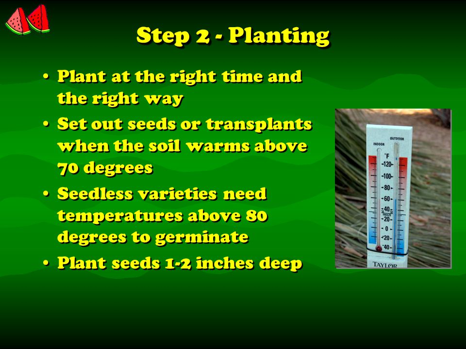 Step 2 - Planting Plant at the right time and the right way Set out seeds or transplants when the soil warms above 70 degrees Seedless varieties need temperatures above 80 degrees to germinate Plant seeds 1-2 inches deep Plant at the right time and the right way Set out seeds or transplants when the soil warms above 70 degrees Seedless varieties need temperatures above 80 degrees to germinate Plant seeds 1-2 inches deep