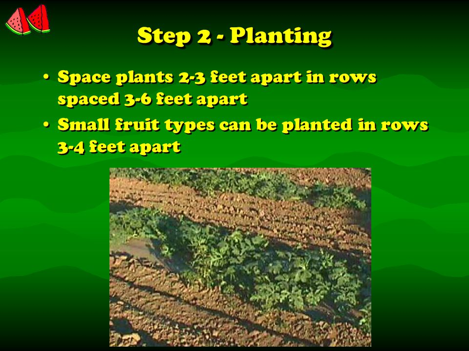 Step 2 - Planting Space plants 2-3 feet apart in rows spaced 3-6 feet apart Small fruit types can be planted in rows 3-4 feet apart Space plants 2-3 feet apart in rows spaced 3-6 feet apart Small fruit types can be planted in rows 3-4 feet apart