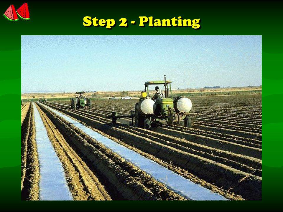 Step 2 - Planting