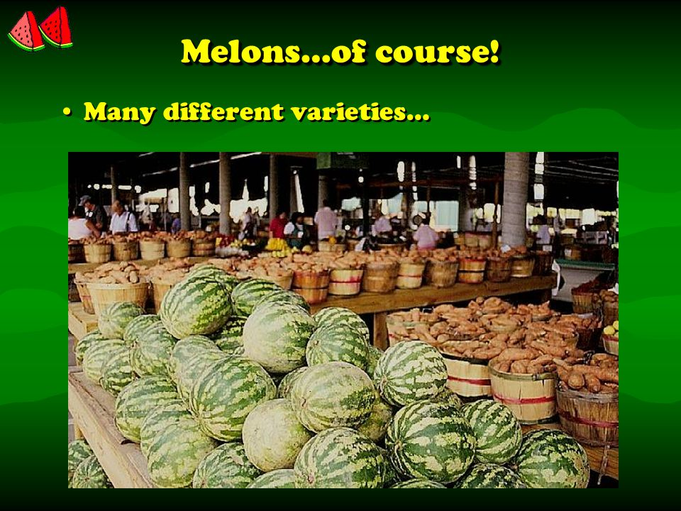 Melons…of course! Many different varieties…