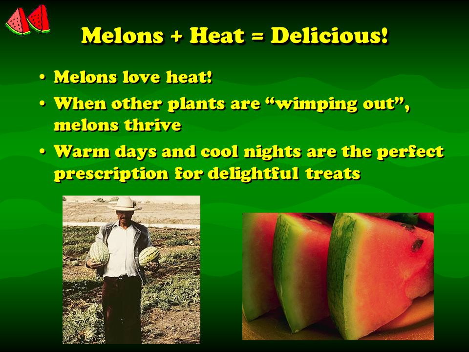 Melons + Heat = Delicious. Melons love heat.