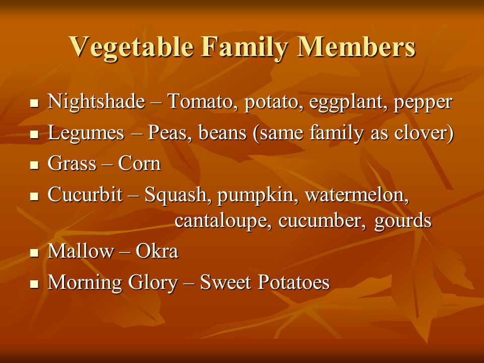 Vegetable Family Members Composite – Lettuce, chicory, endive, escarole, salsify, dandelion, Jerusalem artichoke Composite – Lettuce, chicory, endive, escarole, salsify, dandelion, Jerusalem artichoke Parsley – Carrots, parsley, celery, parsnip Parsley – Carrots, parsley, celery, parsnip Amaryllis – Onions, garlic, leek, chive, Amaryllis – Onions, garlic, leek, chive, Goosefoot – Spinach, beets & chard.