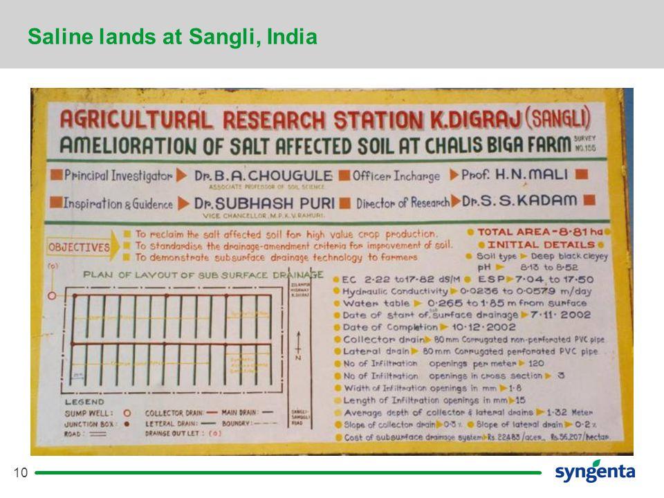 10 Saline lands at Sangli, India