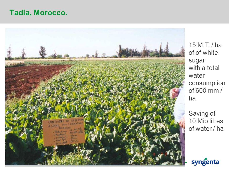 19 Tadla, Morocco. 15 M.T. / ha of of white sugar with a total water consumption of 600 mm / ha Saving of 10 Mio litres of water / ha