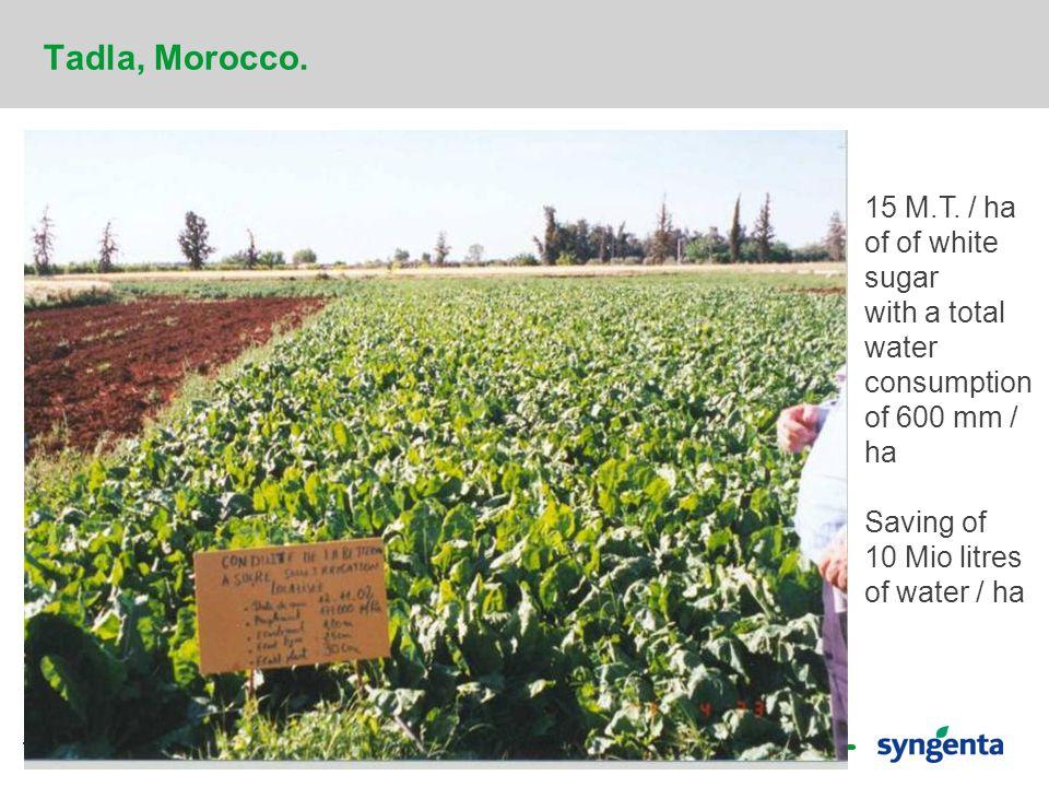 19 Tadla, Morocco. 15 M.T.