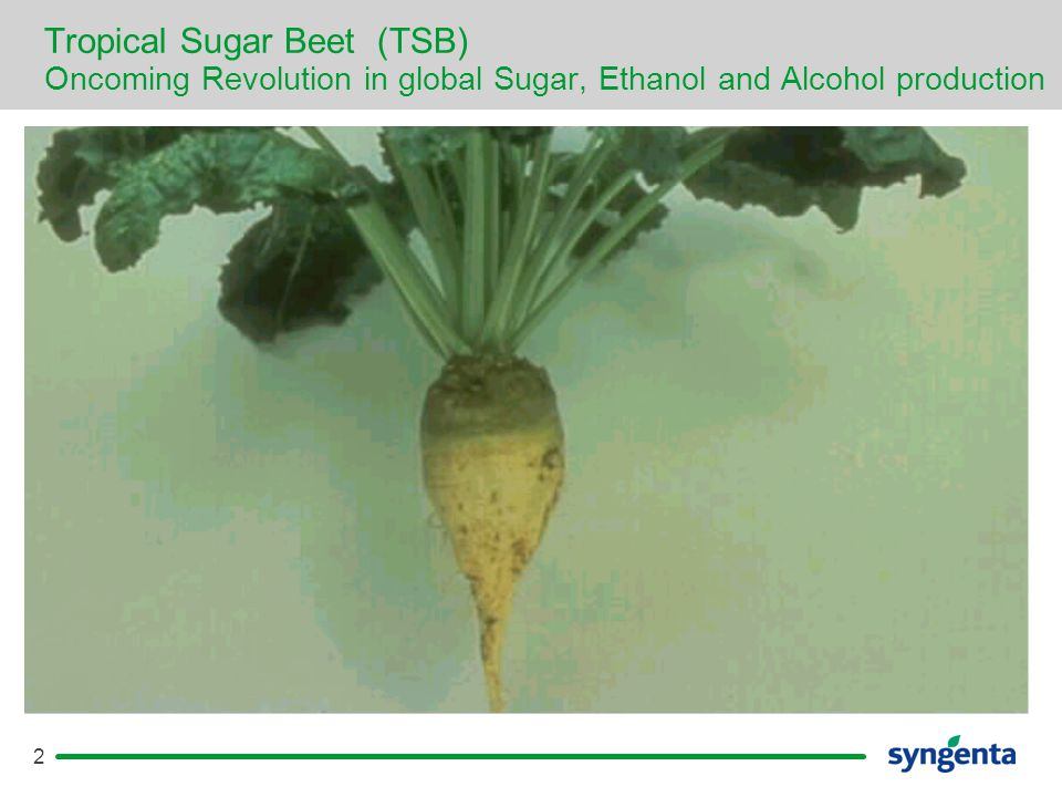 2 Tropical Sugar Beet (TSB) Oncoming Revolution in global Sugar, Ethanol and Alcohol production