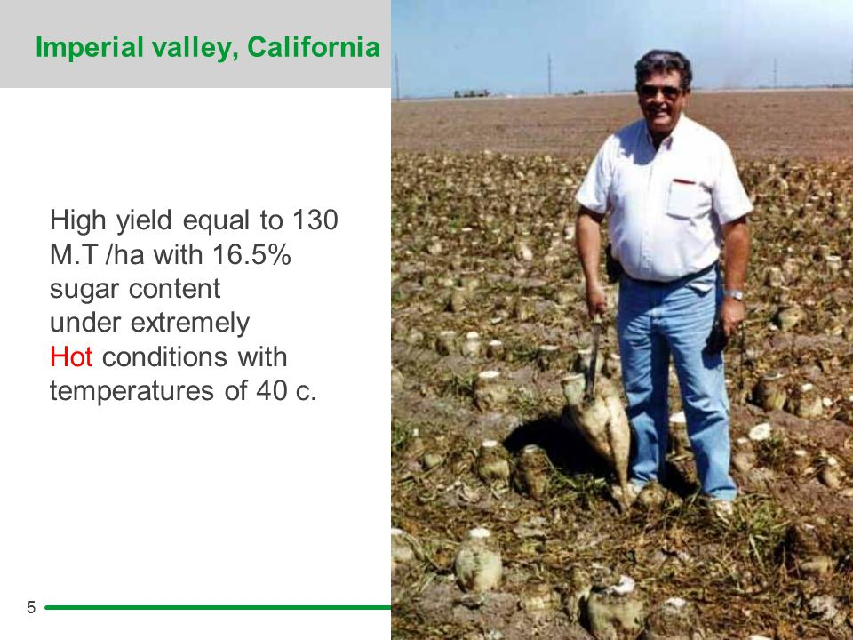 5 Imperial valley, California High yield equal to 130 M.T /ha with 16.5% sugar content under extremely Hot conditions with temperatures of 40 c.