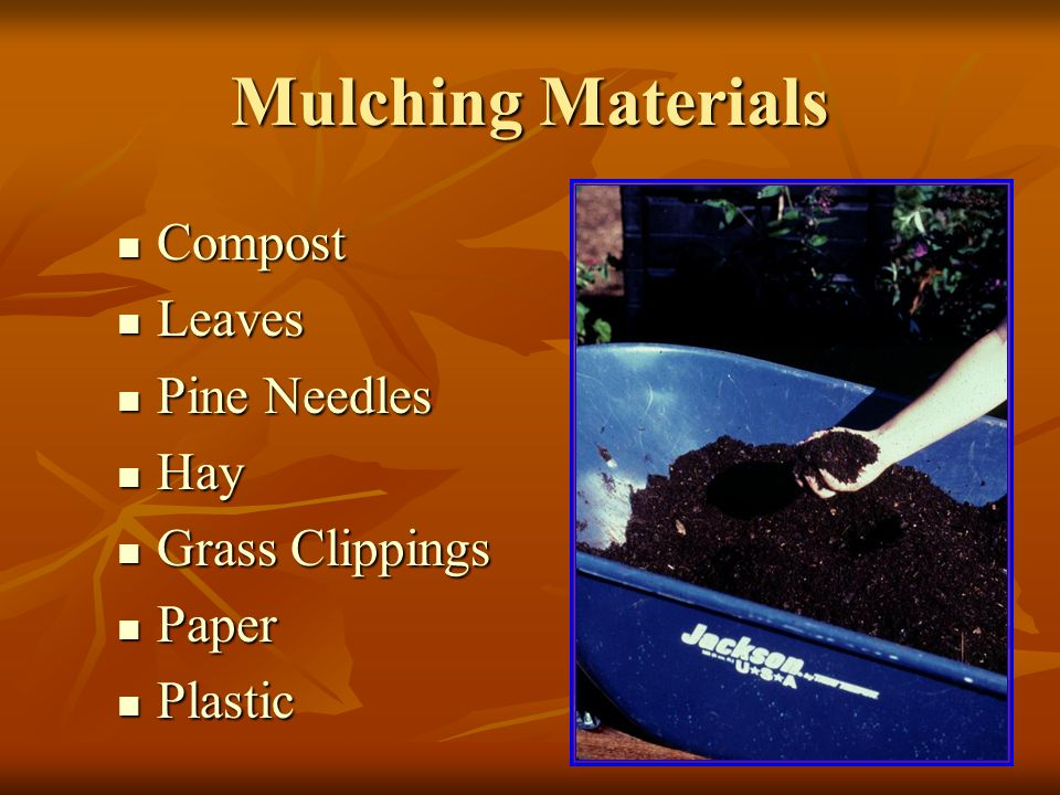 Mulching Materials Compost Compost Leaves Leaves Pine Needles Pine Needles Hay Hay Grass Clippings Grass Clippings Paper Paper Plastic Plastic