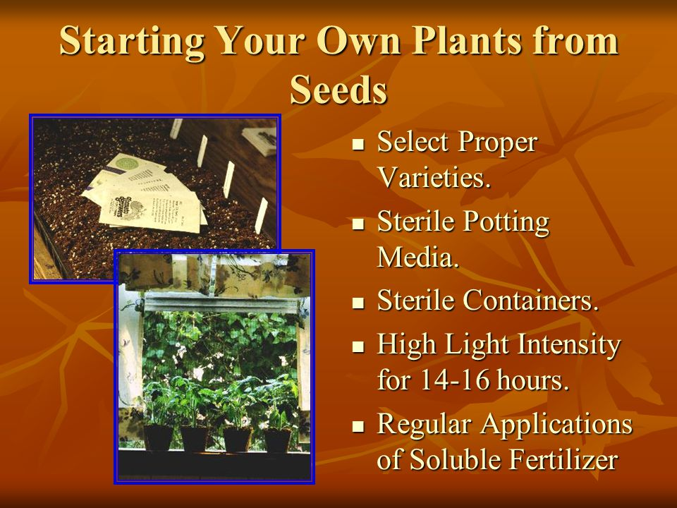 Starting Your Own Plants from Seeds Select Proper Varieties.