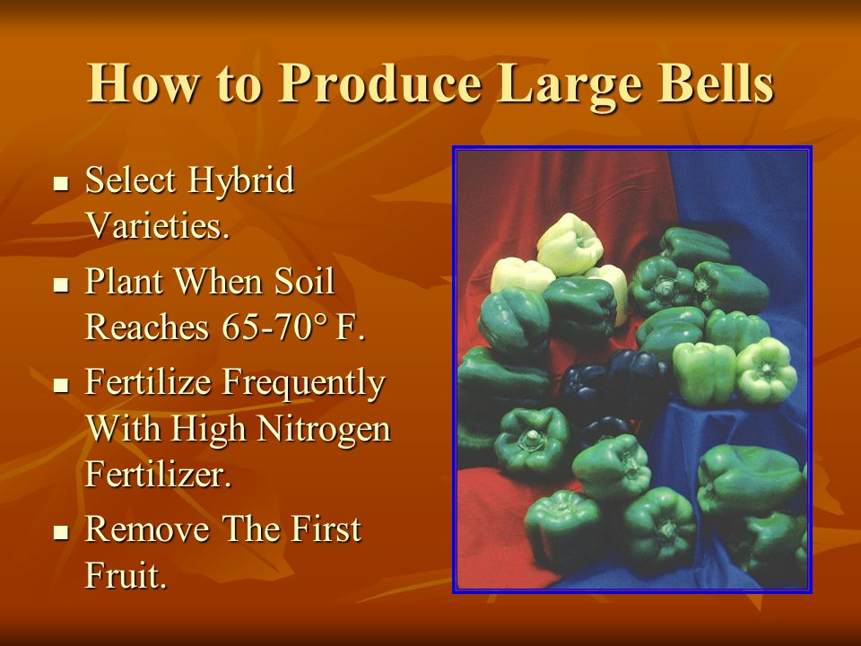 How to Produce Large Bells Select Hybrid Varieties.