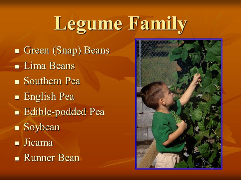 Legume Family Green (Snap) Beans Green (Snap) Beans Lima Beans Lima Beans Southern Pea Southern Pea English Pea English Pea Edible-podded Pea Edible-podded Pea Soybean Soybean Jicama Jicama Runner Bean Runner Bean
