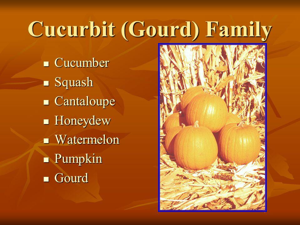 Cucurbit (Gourd) Family Cucumber Cucumber Squash Squash Cantaloupe Cantaloupe Honeydew Honeydew Watermelon Watermelon Pumpkin Pumpkin Gourd Gourd