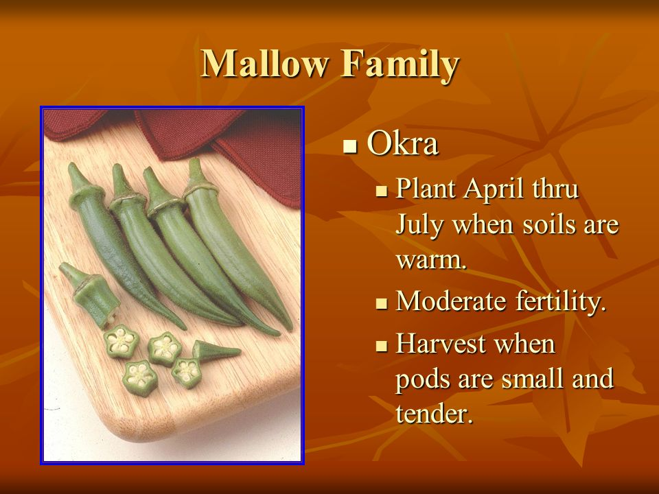 Mallow Family Okra Okra Plant April thru July when soils are warm.