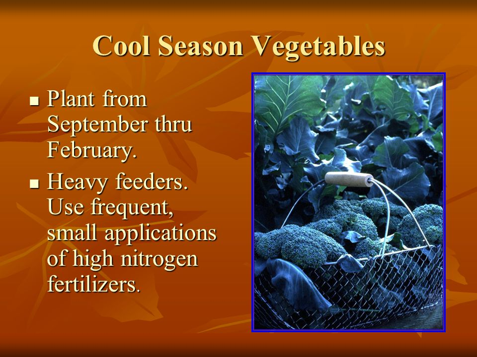 Cool Season Vegetables Plant from September thru February.