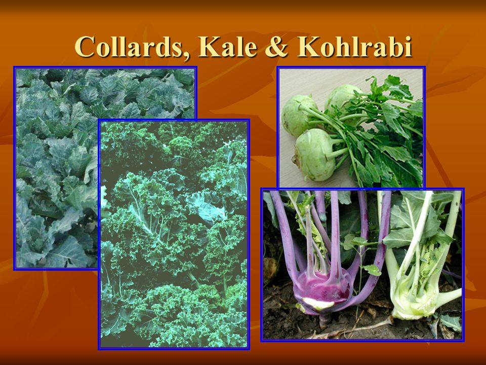 Collards, Kale & Kohlrabi