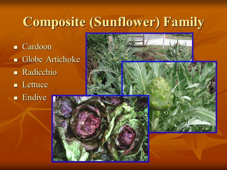 Composite (Sunflower) Family Cardoon Cardoon Globe Artichoke Globe Artichoke Radicchio Radicchio Lettuce Lettuce Endive Endive
