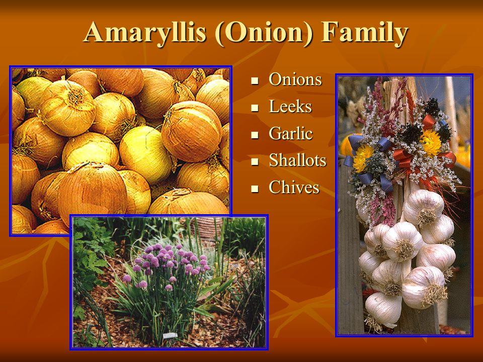 Amaryllis (Onion) Family Onions Onions Leeks Leeks Garlic Garlic Shallots Shallots Chives Chives
