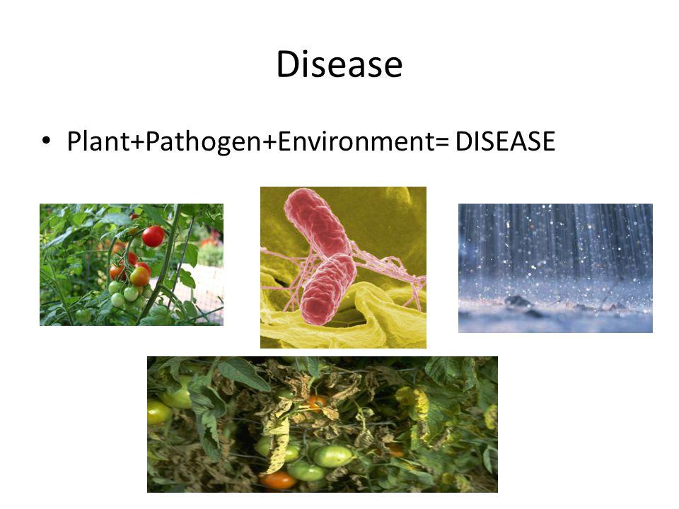 Disease Plant+Pathogen+Environment= DISEASE