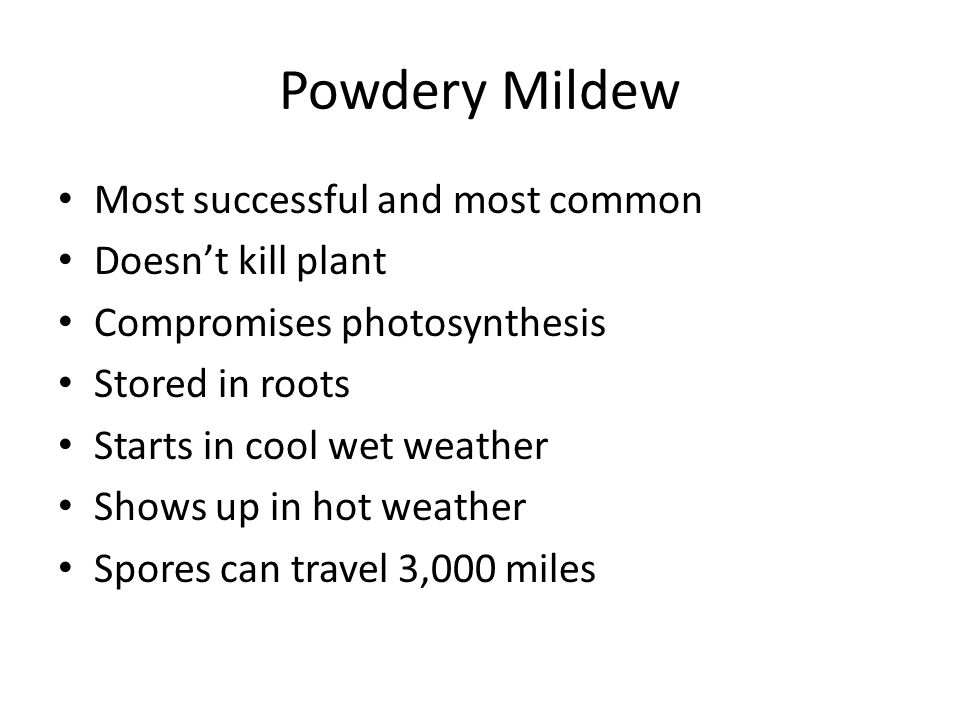 Powdery Mildew Most successful and most common Doesn't kill plant Compromises photosynthesis Stored in roots Starts in cool wet weather Shows up in ho