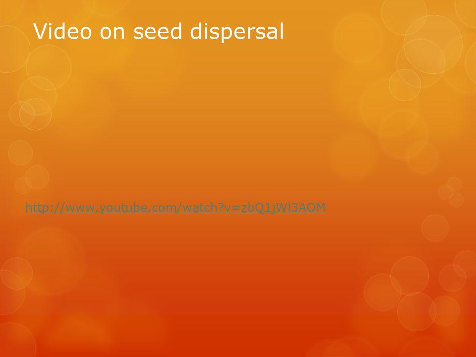 Video on seed dispersal http://www.youtube.com/watch?v=zbQ1jWl3AOM