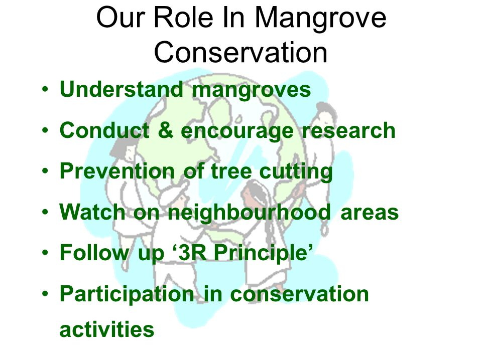 Our Role In Mangrove Conservation Understand mangroves Conduct & encourage research Prevention of tree cutting Watch on neighbourhood areas Follow up '3R Principle' Participation in conservation activities