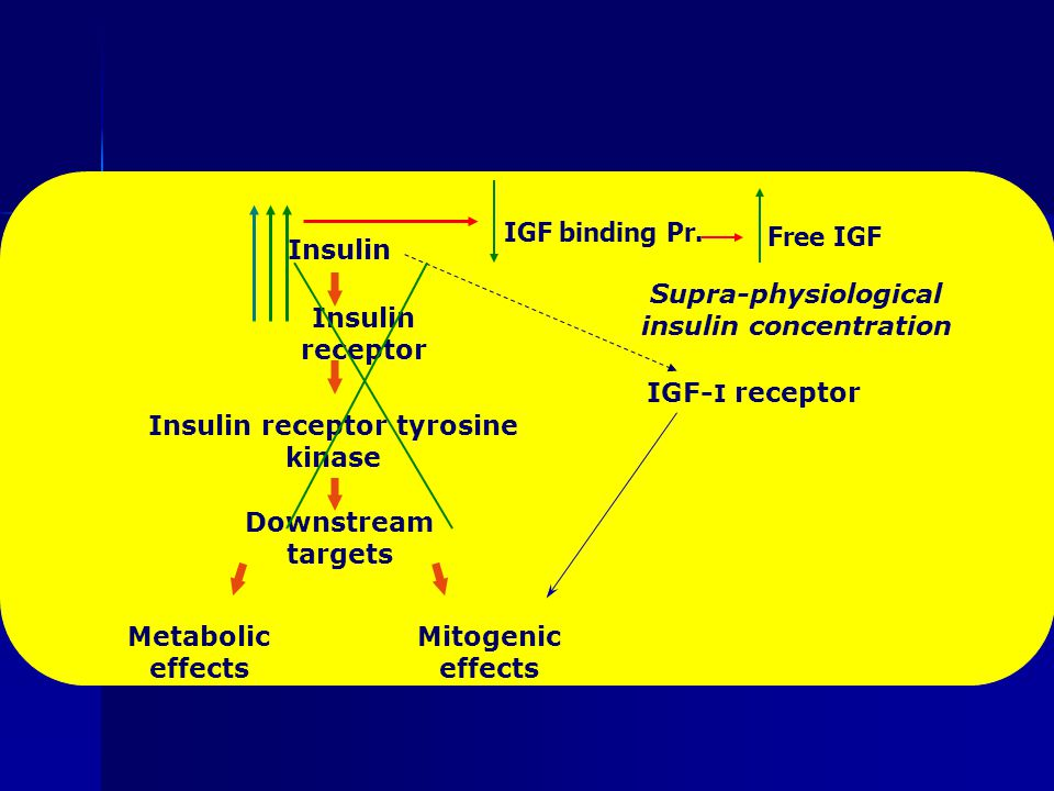 Insulin Insulin receptor Insulin receptor tyrosine kinase Downstream targets Metabolic effects Mitogenic effects IGF- I receptor Supra-physiological insulin concentration IGF binding Pr.