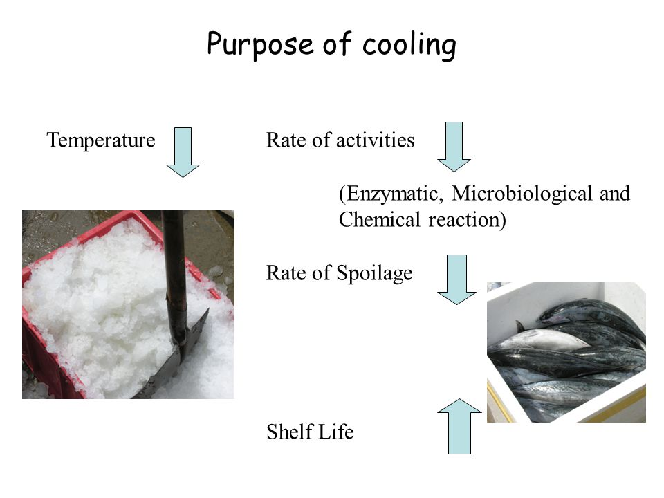 Temperature Rate of activities (Enzymatic, Microbiological and Chemical reaction) Rate of Spoilage Shelf Life Purpose of cooling