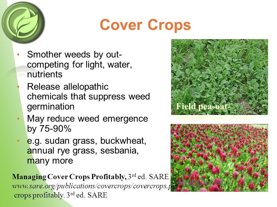 Cover Crops Smother weeds by out- competing for light, water, nutrients Release allelopathic chemicals that suppress weed germination May reduce weed emergence by 75-90% e.g.