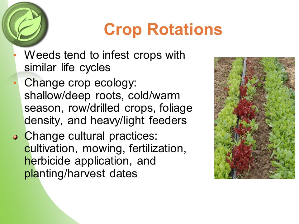 Crop Rotations Weeds tend to infest crops with similar life cycles Change crop ecology: shallow/deep roots, cold/warm season, row/drilled crops, folia