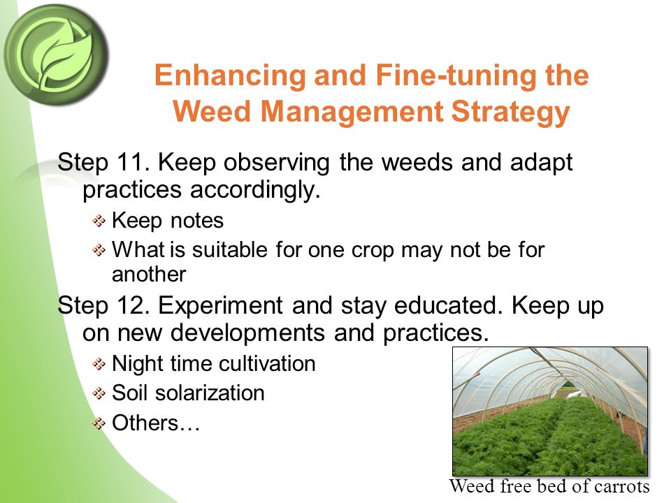 Enhancing and Fine-tuning the Weed Management Strategy Step 11. Keep observing the weeds and adapt practices accordingly. Keep notes What is suitable