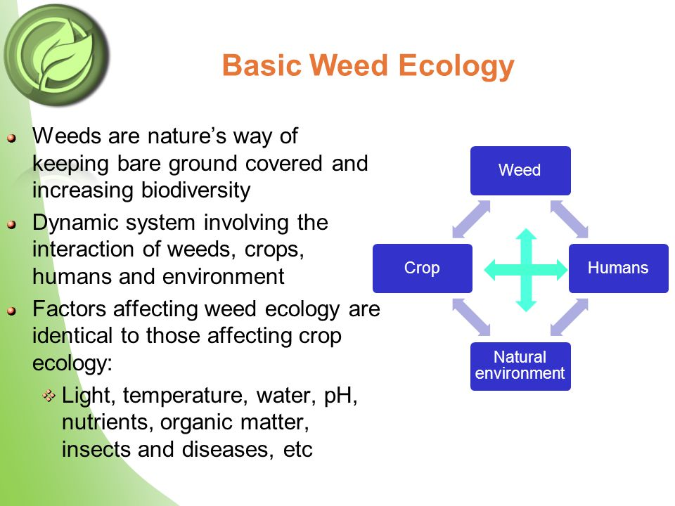 Basic Weed Ecology Weeds are nature's way of keeping bare ground covered and increasing biodiversity Dynamic system involving the interaction of weeds