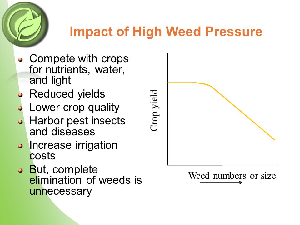 Impact of High Weed Pressure Compete with crops for nutrients, water, and light Reduced yields Lower crop quality Harbor pest insects and diseases Inc