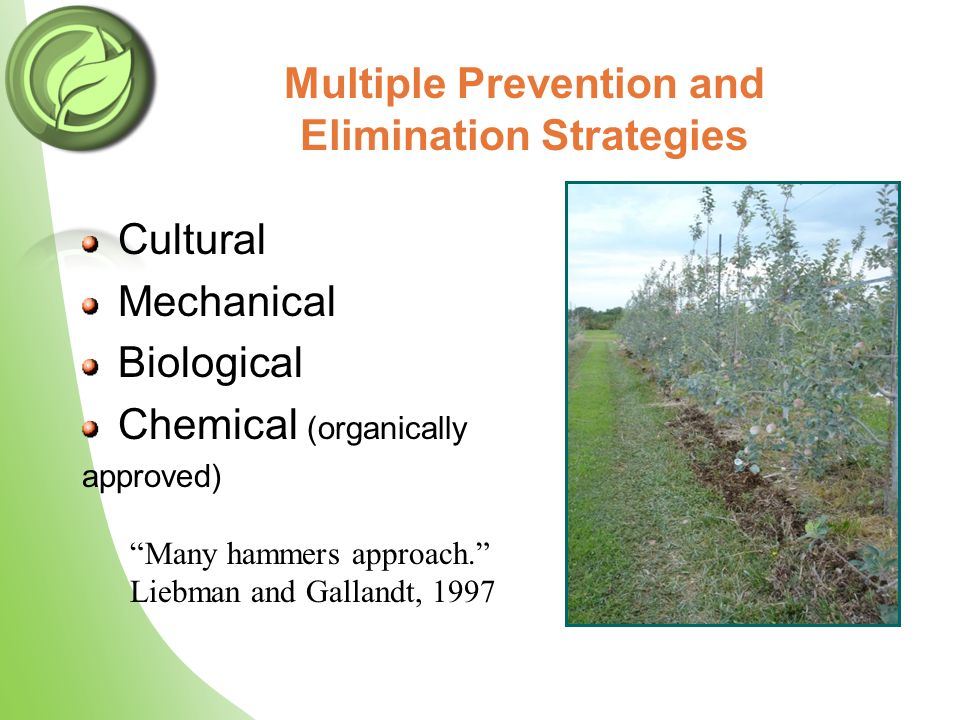 Multiple Prevention and Elimination Strategies Cultural Mechanical Biological Chemical (organically approved) Many hammers approach. Liebman and Gallandt, 1997