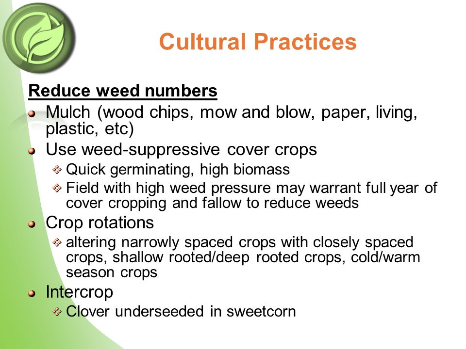 Cultural Practices Reduce weed numbers Mulch (wood chips, mow and blow, paper, living, plastic, etc) Use weed-suppressive cover crops Quick germinating, high biomass Field with high weed pressure may warrant full year of cover cropping and fallow to reduce weeds Crop rotations altering narrowly spaced crops with closely spaced crops, shallow rooted/deep rooted crops, cold/warm season crops Intercrop Clover underseeded in sweetcorn