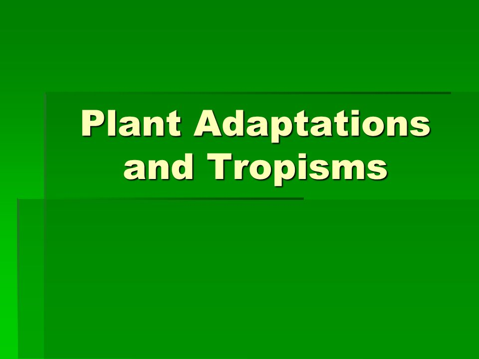 Chemotropism & Hydrotropism  Chemotropisms are plant growth patterns directed by chemicals in the environment.