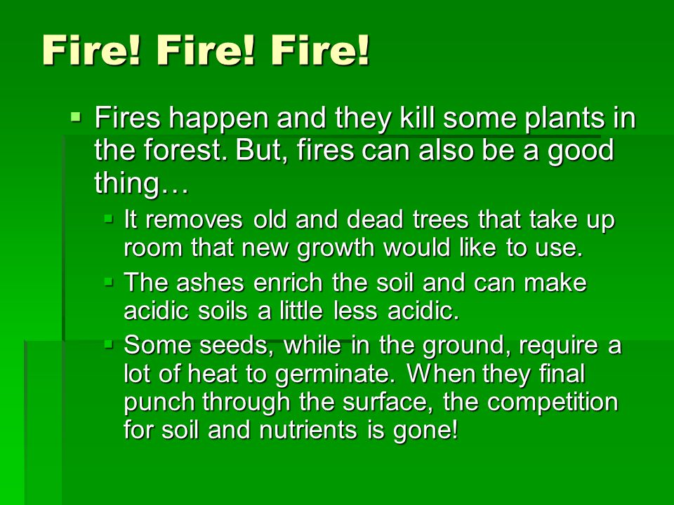 Fire! Fire! Fire!  Fires happen and they kill some plants in the forest. But, fires can also be a good thing…  It removes old and dead trees that ta