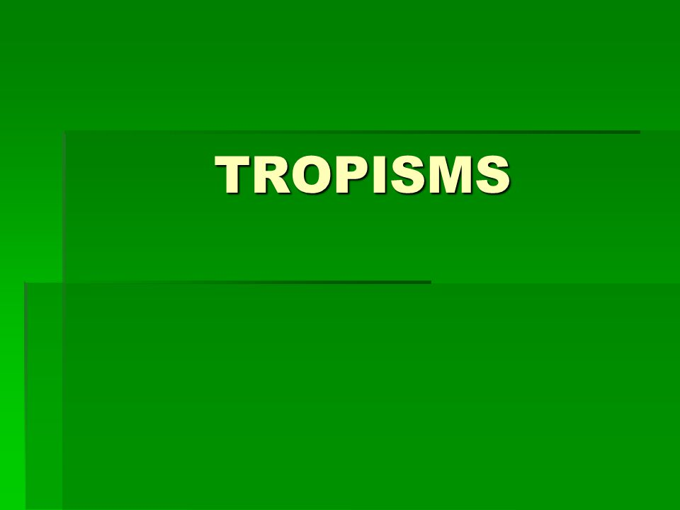 Tropisms  A tropism is a plant growth response to an external/environmental stimulus.