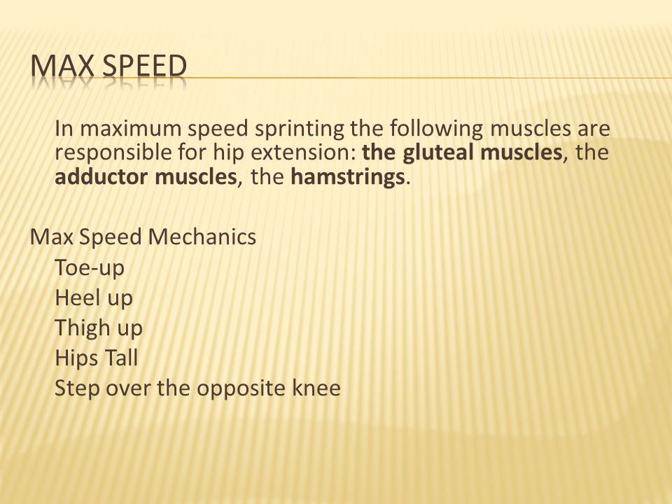 In maximum speed sprinting the following muscles are responsible for hip extension: the gluteal muscles, the adductor muscles, the hamstrings.