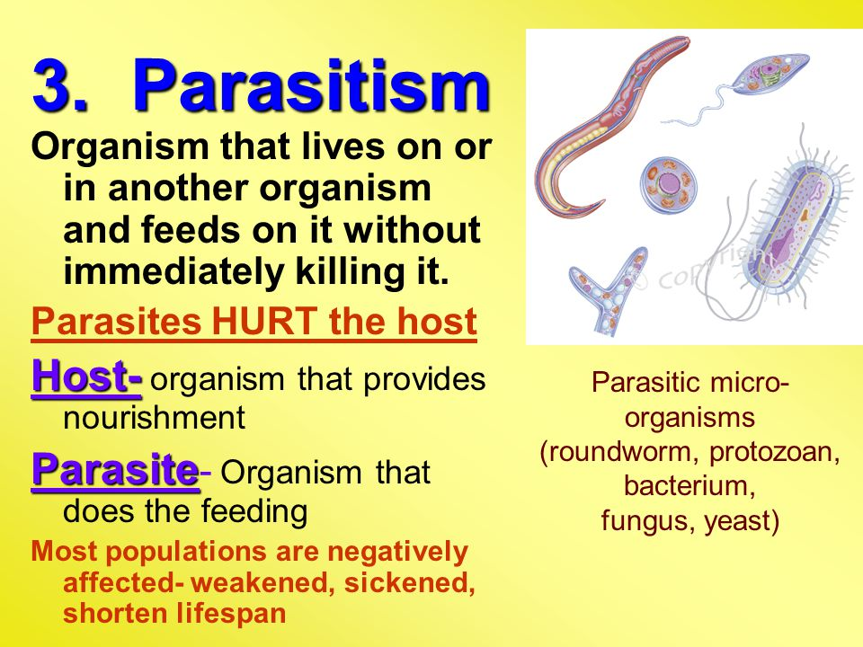 3. Parasitism Organism that lives on or in another organism and feeds on it without immediately killing it. Parasites HURT the host Host- Host- organi