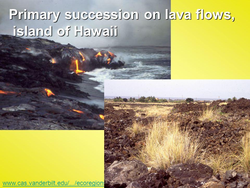 www.cas.vanderbilt.edu/.../ecoregions/70202.htm Primary succession on lava flows, island of Hawaii island of Hawaii