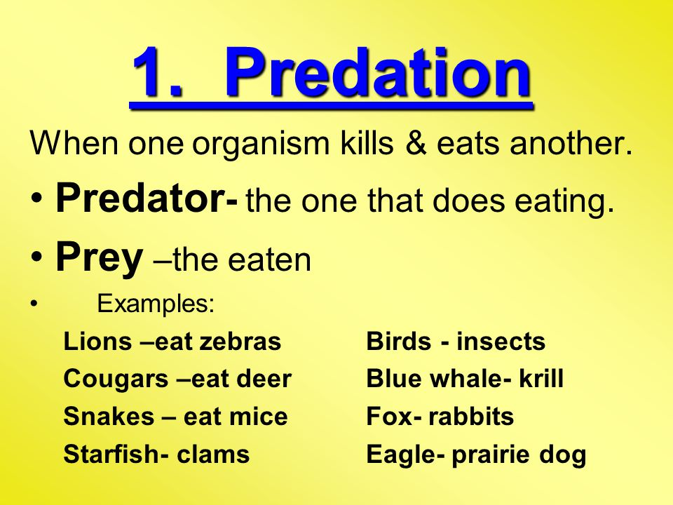 1.Predation When one organism kills & eats another.